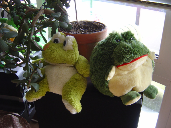 Froggies on their own