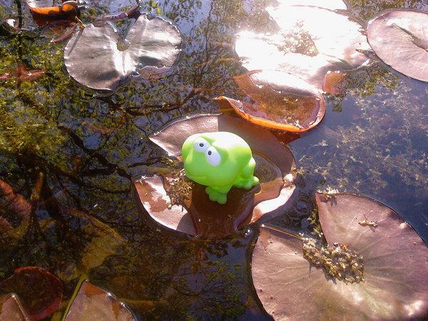 Frosch AUF dem Teich