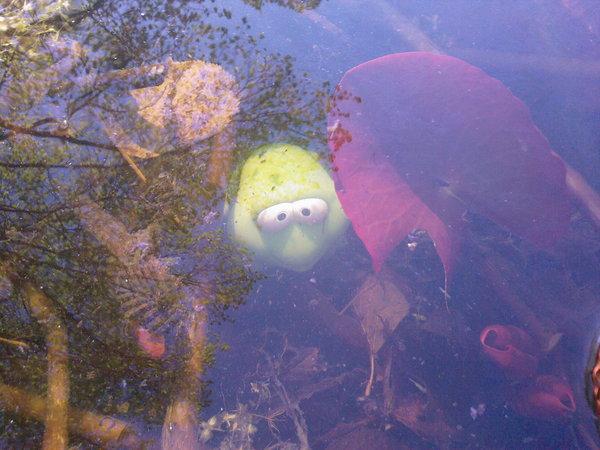 Frosch IN dem Teich