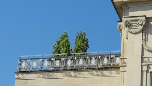 Weimar, Theaterplatz, Zwei Bäume