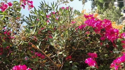 Vilamoura Flowers