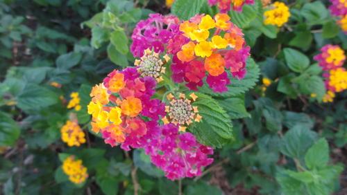 Quarteira Flowers