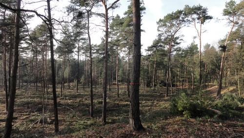 Parforce Heide