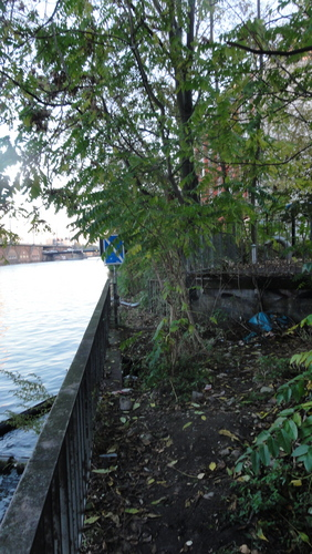 Banks of River Spree Inspection, Jungle