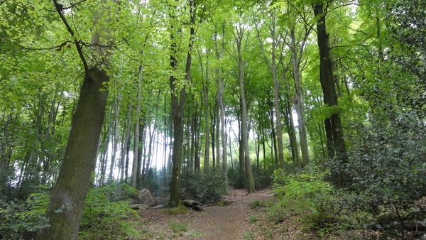 Kettwig, Wanderweg A2