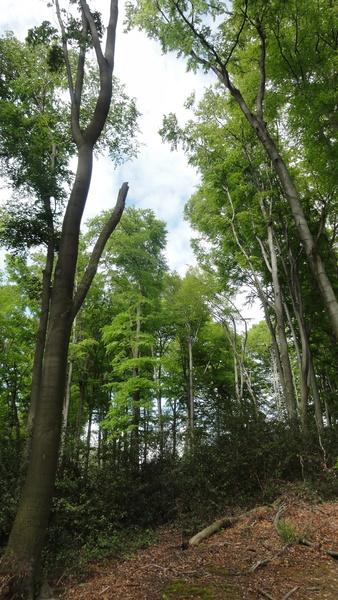 Oefte, Ex Feen-Thal zu Tigerwald