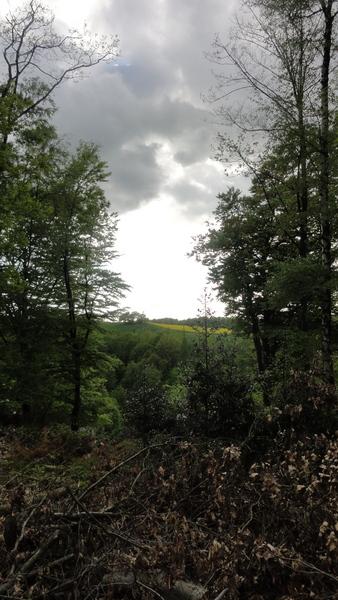 Blick von Pastoratsberg 40 auf Oase