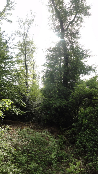 Alter Park auf Pastoratsberg
