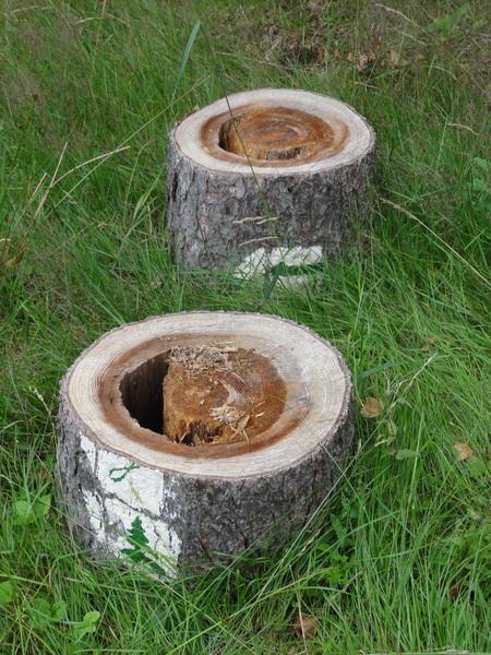 Ilmenau, Goethe Wanderweg, alte Baumscheiben mit Wanderzeichen