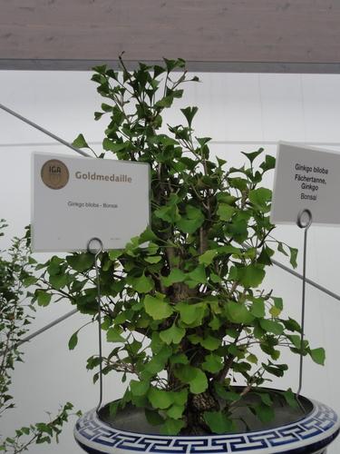 IGA, Blumenhalle