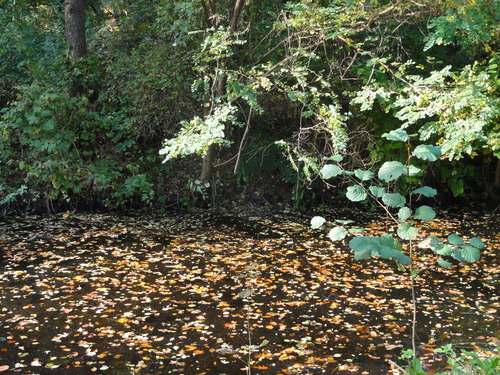 Herbst im Tiergarten