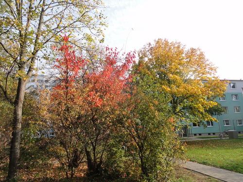 Nahe Fischerinsel im Herbst