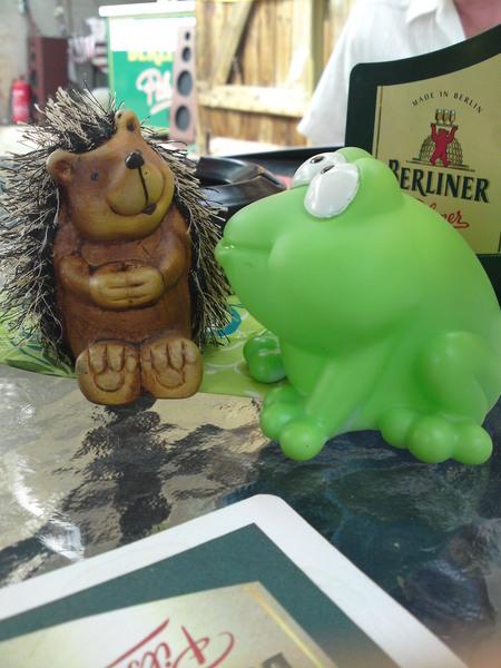 Frosch in Birkenwerder